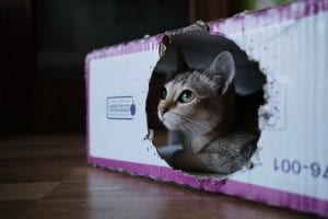 The-location-of-the-litter-box-could-be-a-problem-buskercat.com