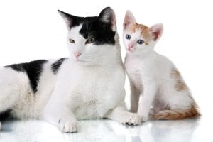 Body structure Physic differentiate Cats from Kittens