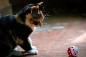 cat-training-start-small-Buskerscat