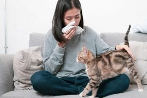 Cat Dander Can Cause Allergic Reactions