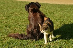 Train-your-dog-to-live-with-cats