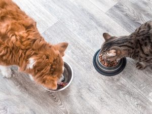 can-cats-eat-dog-food
