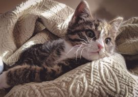 5 Ways to Clean and Control Cat Hair in the Home