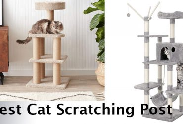 10 Best Cat Scratching Posts and Cat Tree Towers in 2021