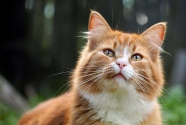 What to Do When your Cat is Stung?