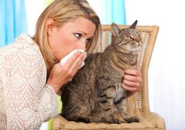 How to Get Rid of Cat Allergies and Dander?