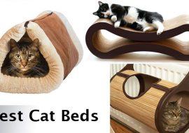 7 of The Best Cat Beds in 2021