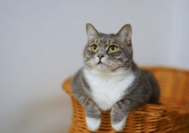 Here's Why Your Cat Isn't Using Their Litter Box