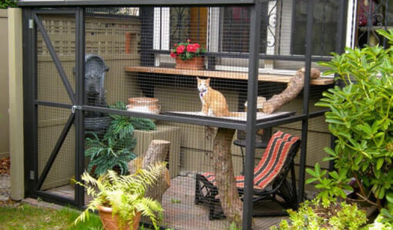 10 Best Cat Enclosures For Your Feline Friend To Enjoy Nature Buskers