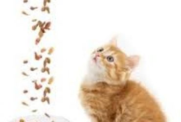 10 of The Best Dry Cat Foods for Felines to Enjoy