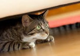 What is Cat Anxiety?