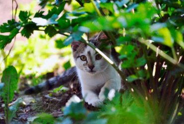 How to Stop Cats from Fouling in your Garden for good