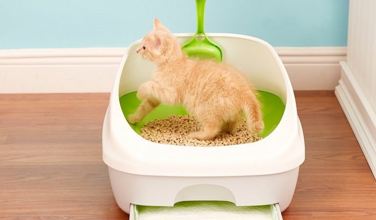 10 Best Cat Litter for Indoor Cats (Clumping & Non-clumping)