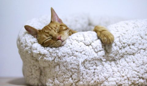 Cat Sleepy, Should I be Worried with Too Much or Too Little Sleep?