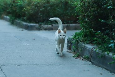 Why Do Cats Wag their Tail