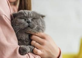 Here are 10 Reasons Why Cats Make Great Pets