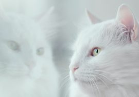 Death of your Cat: How Do You Grieve?