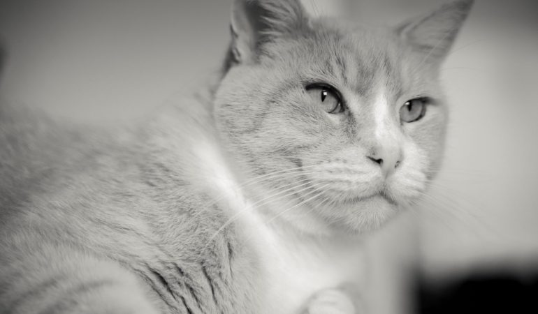 100 Handsome Male Cat Names